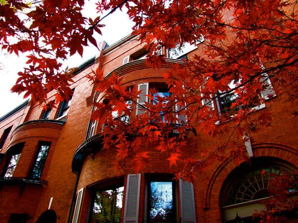 Autumn Brownstones by Ryser915