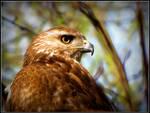 Predatory Profile