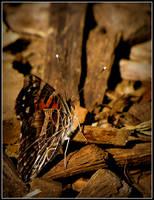 Hiding in Plain Sight by Ryser915