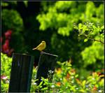 Spring Warbler by Ryser915