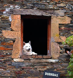 The Sitting Dog