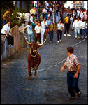 Bullfight in Azores