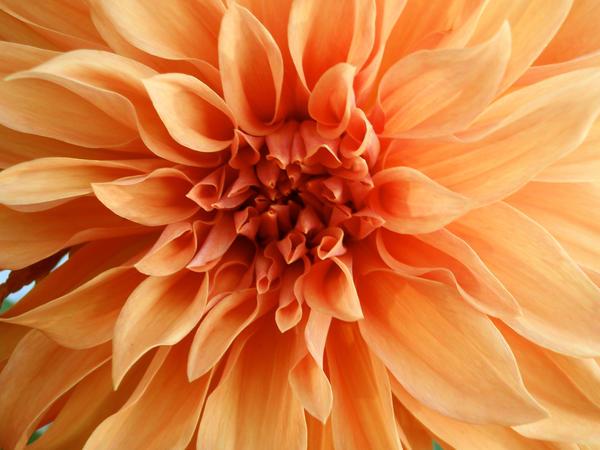 Color Series: Orange by aquaavatar