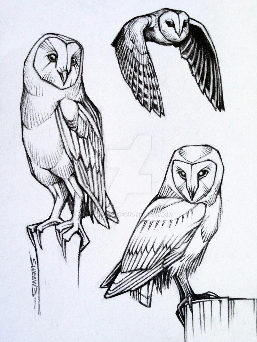 Owl Line Drawing Tattoo : Barn owl studies by sweav on deviantart