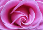 Rose 007 update by Deb-e-ann