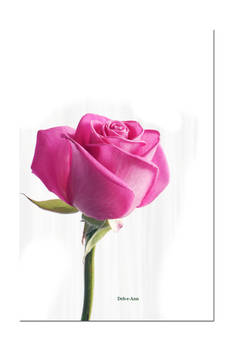 Mothers Day Rose 079