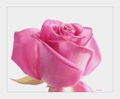 Rose for Lynne by Deb-e-ann