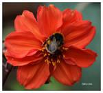 Sunday Bee