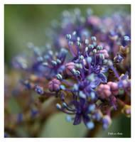 Cornwall flower 039 by Deb-e-ann
