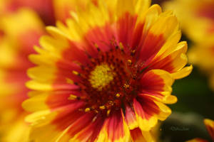 Fireflower  077 by Deb-e-ann