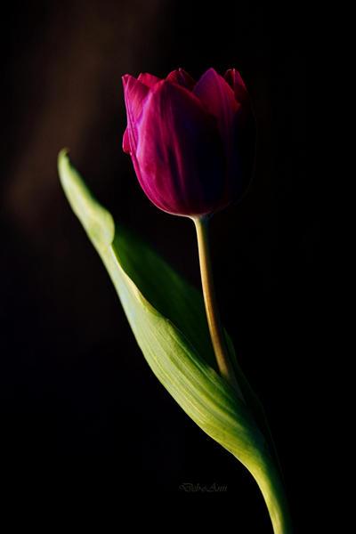 Light and Dark by Deb-e-ann