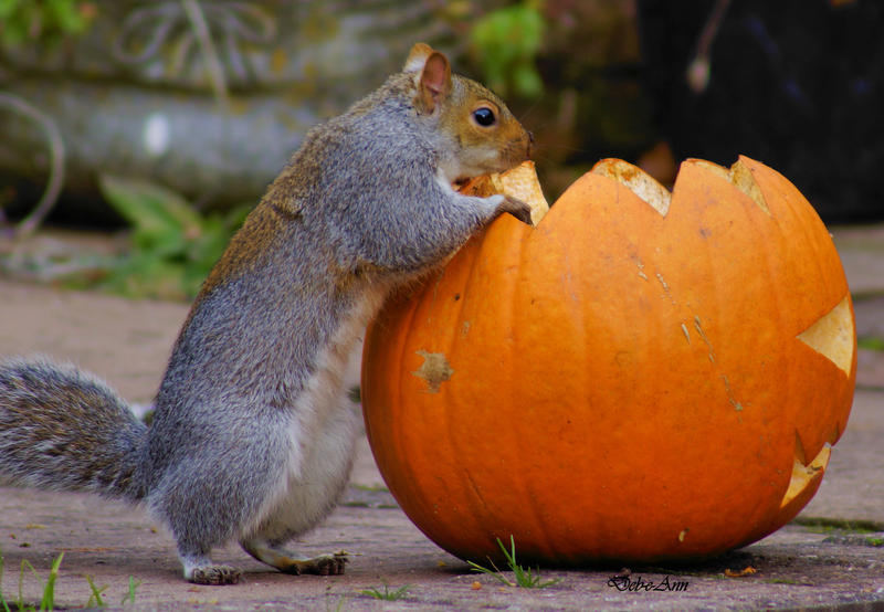 Hmm Nuts In a Pumpkin by Deb-e-ann