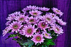 Bright Lilac by Deb-e-ann