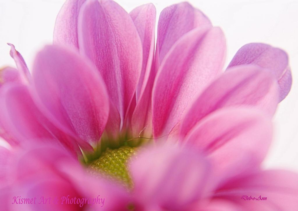Pretty Pink by Deb-e-ann