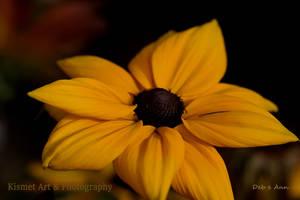 Autumn Gold by Deb-e-ann