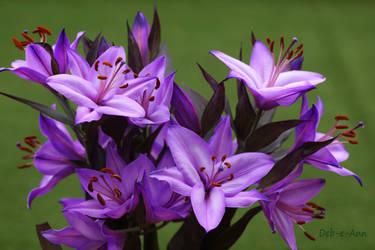 Lilac Lillies by Deb-e-ann