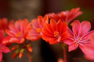 Orange Delight by Deb-e-ann