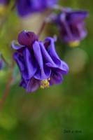 Purple Blue by Deb-e-ann