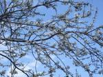 Primavera in arrivo by EstelAlasse