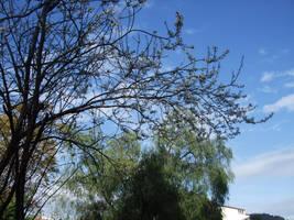 Primavera e cielo azzurro by EstelAlasse
