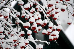 Rain of berries by Lomil-Gathiel