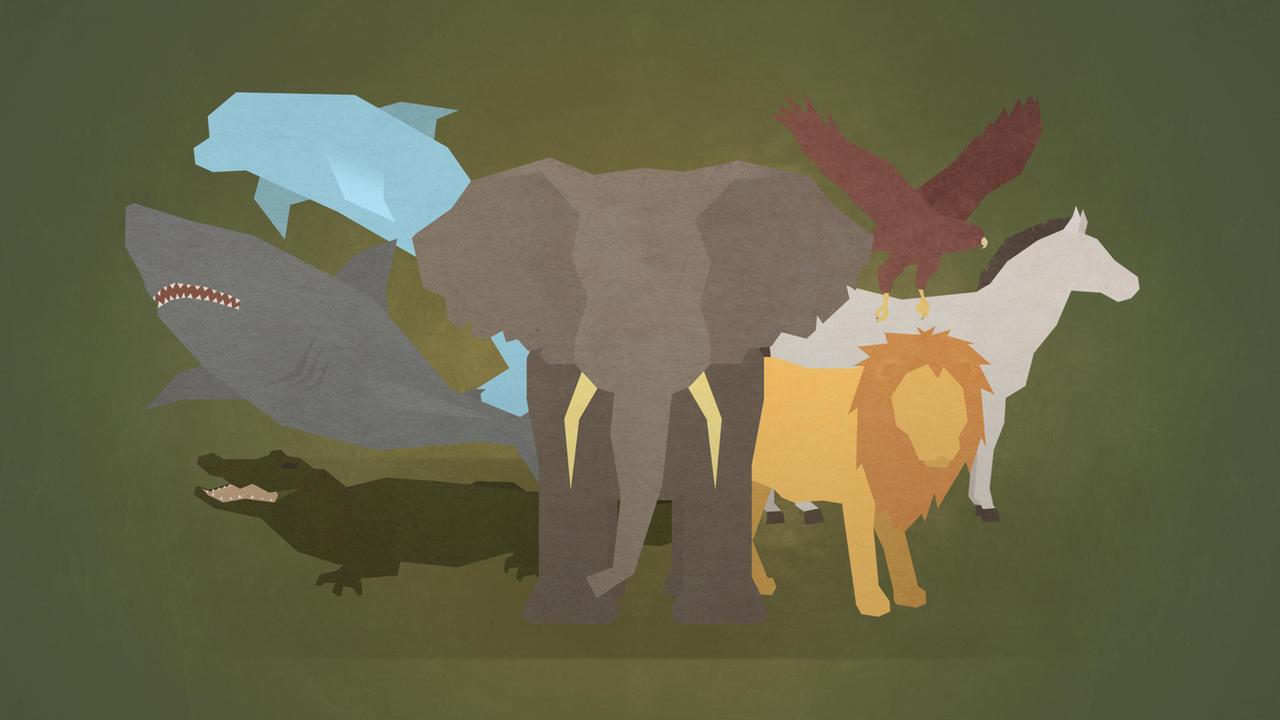 Animals by LEMMiNO