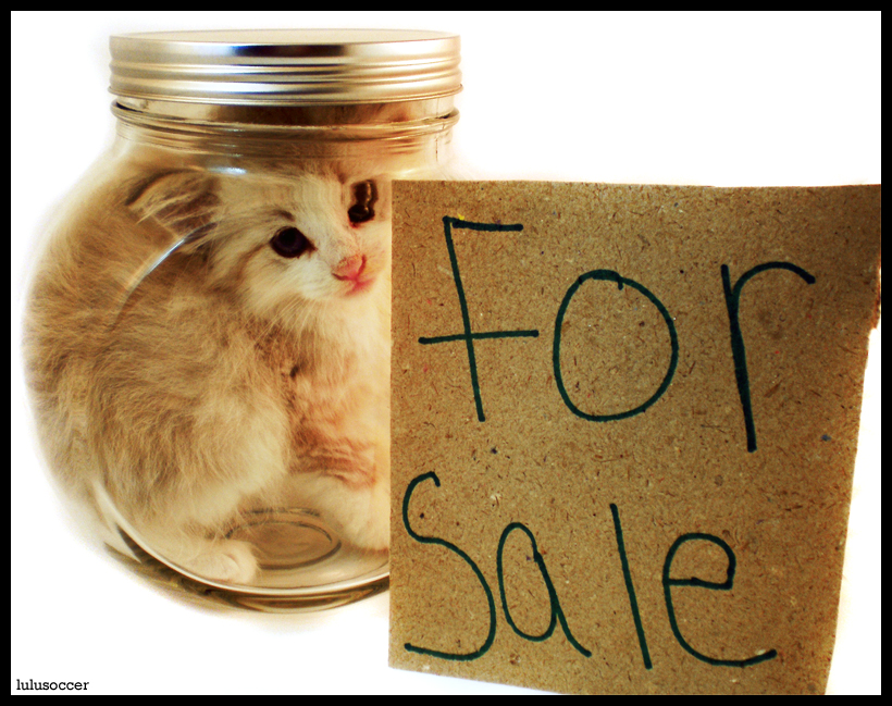 http://fc01.deviantart.net/fs47/f/2009/164/4/3/Kitten_For_Sale_by_lulusoccer.jpg