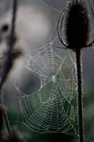Web 4 by El-Sharra