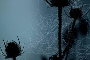 Web 5 by El-Sharra