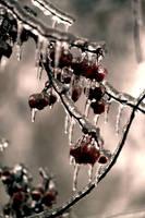 Ice Berries by El-Sharra
