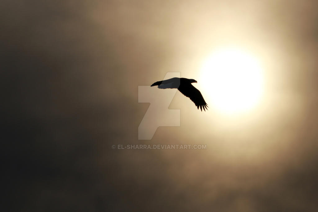 Sun and Bald Eagle by El-Sharra