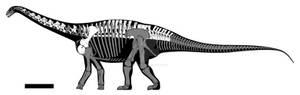 Haplocanthosaurus Part 1