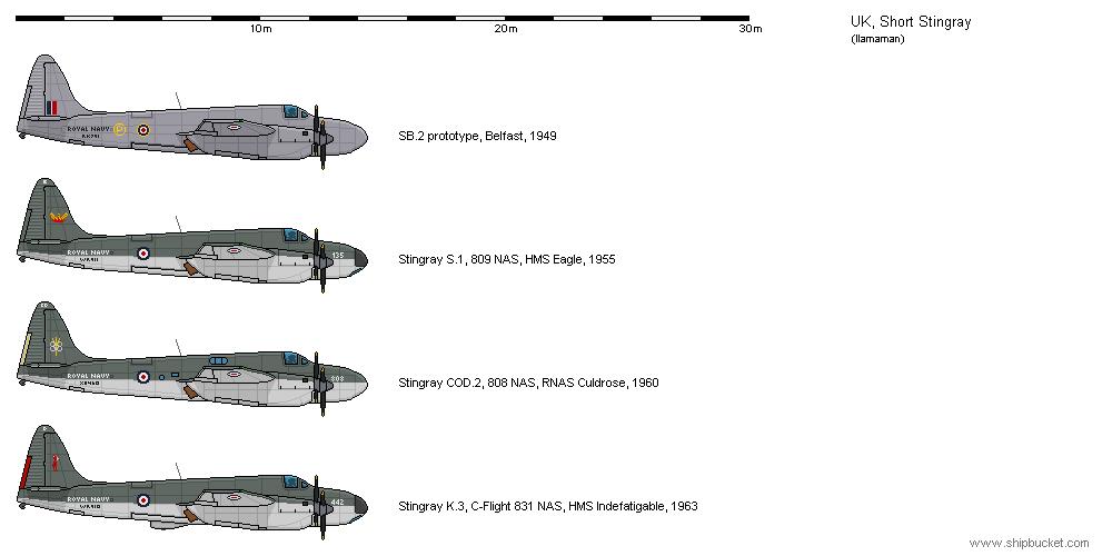 Short Stingray