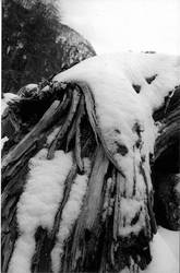 snow log by spacemanspiff22