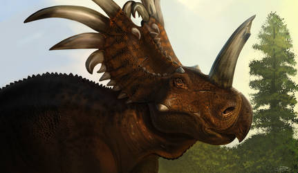 An Elderly Styracosaurus