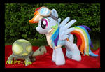 Wonderbolt Academy Rainbow Dash and pet Tank
