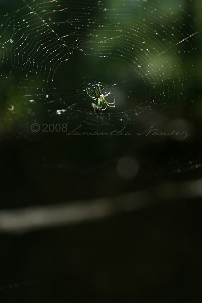Spider by BlackCarrionRose