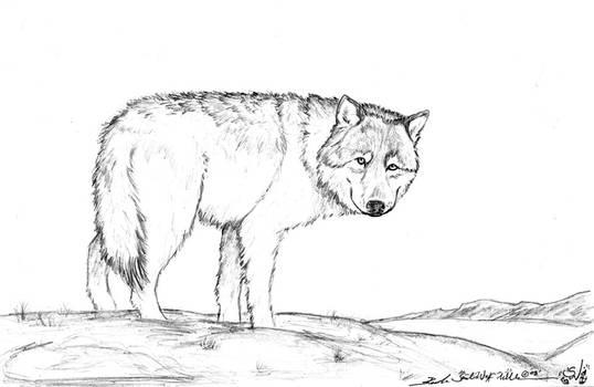 + Dire Wolf +