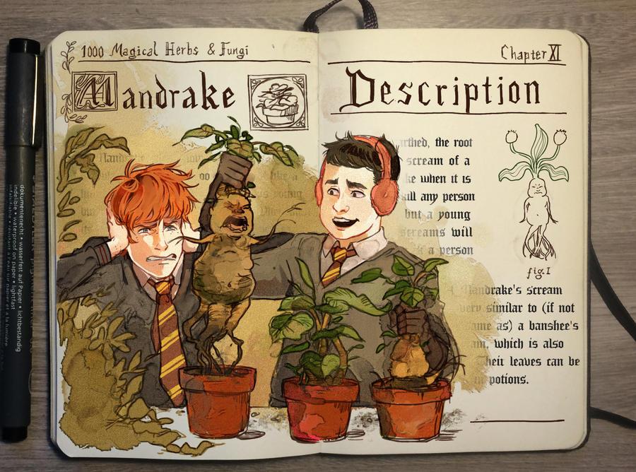 Mandrake by Picolo-kun