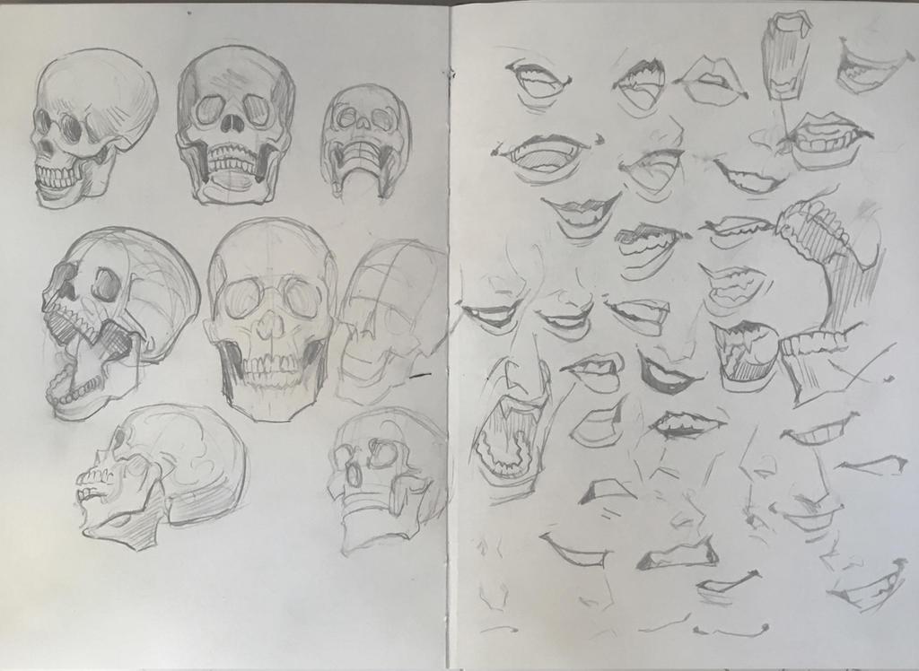 Skull And Teeth Studies by Picolo-kun