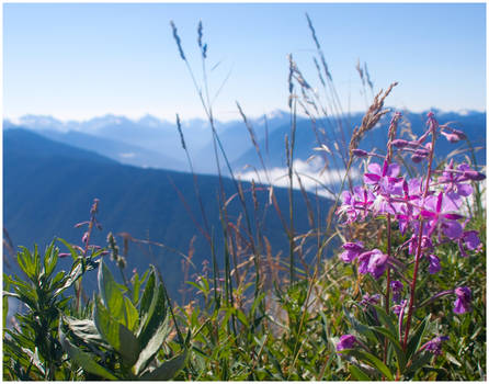 Flowers before mountains
