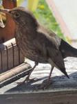 Birdie #1
