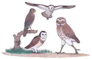 More big prehistoric birds by Dontknowwhattodraw94