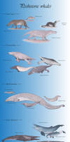 The prehistoric whale series
