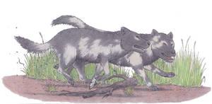 Pleistocene dogs