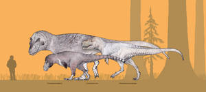 Tyrannosaurids and their feathers