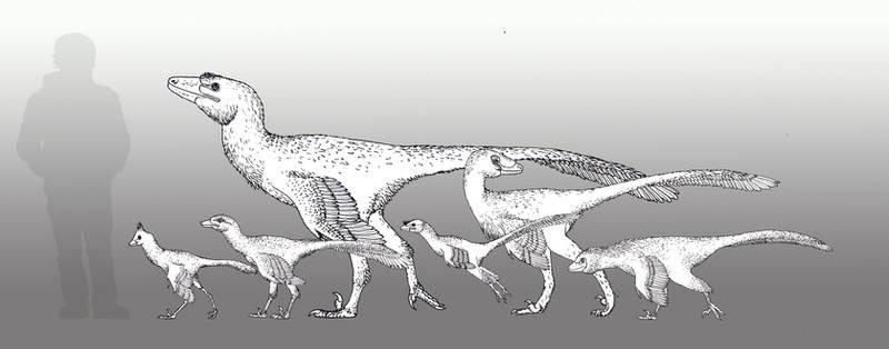 2017 - Year of the Troodontidae