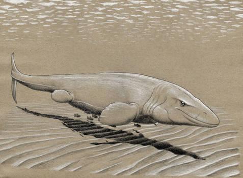 Ammonite Crusher