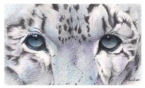 Snow Leopard. A Super Close Up