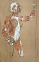 Muscle Anatomy WIP by konstantinek